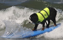 surf-dog-academy-competition