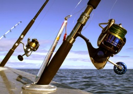 two saltwater spinning reels